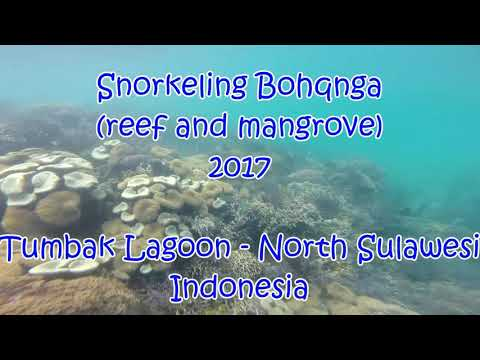 Snorkeling Bohanga (reef + mangrove), Tumbak Lagon - North Sulawesi, Indonesia 2017