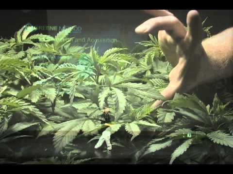 how to grow marijuana dvd