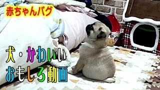 お勧め動画 1位『犬の泣きそうな顔を見たことがありますか? うちのパ...
