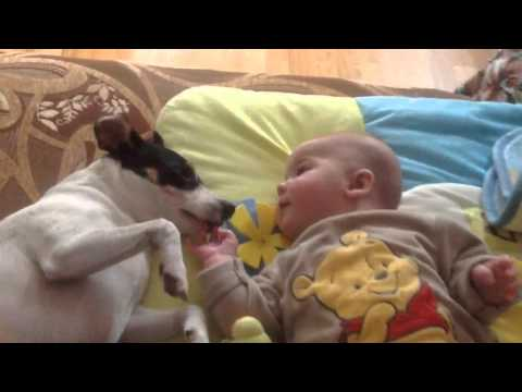 Jack Russell dog with Baby newborn