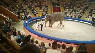 В кировском цирке