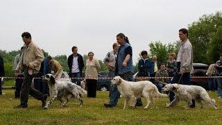 Межрегиональная 116-я Московская выставка собак охотничьих пород. Старший ринг кобелей.