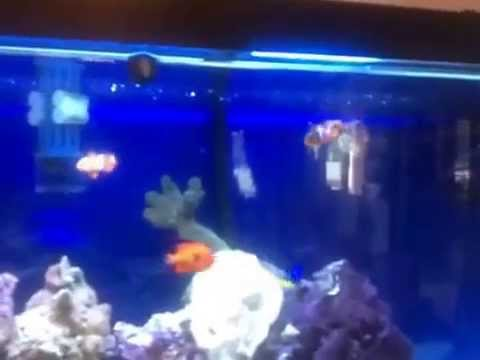 Mail order saltwater fish review youtube for Mail order fish
