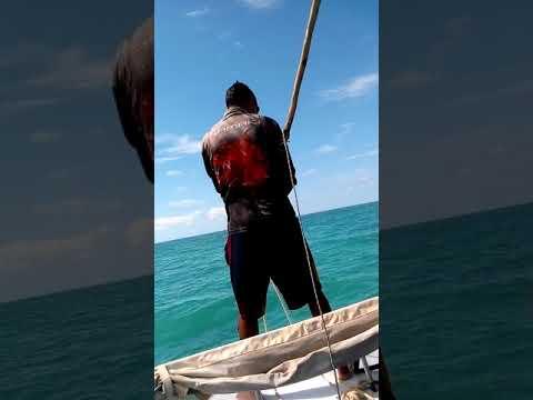 Dugong Hunting , Turtle Hunting