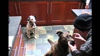 Śmieszne zwierzaki   Smieszne psy i Śmieszne koty 19