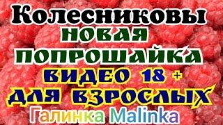 Колесниковы /Новая Попрошайка на ютубе /Видео для взрослых /Обзор Влогов /