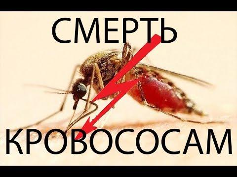 Вопрос: Почему в августе злые комары?