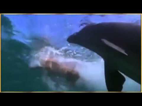 Delfinle itin dostlugu