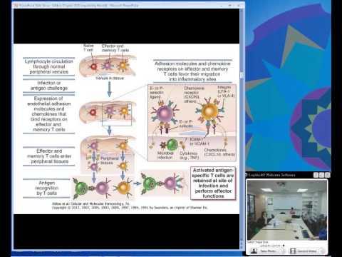 Effector Mechanisms of Cellular Immunity (Ciaccio)