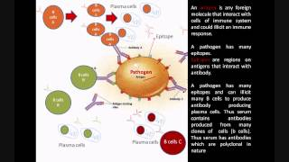Monoclonal and Polyclonal antibodies