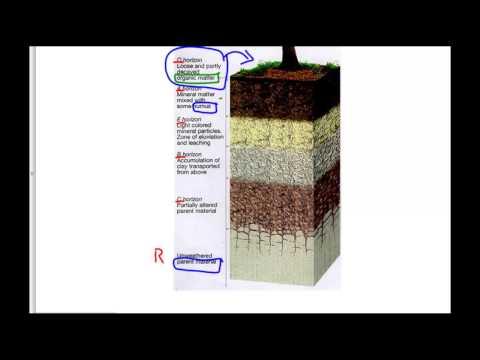 Soil Horizons Explained...