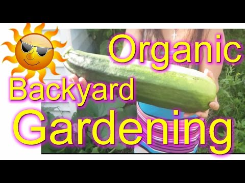 New York Organic Backyard Gardening