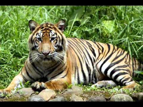 fauna indonesia 0001
