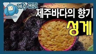 [해피플러스] 제주바다의 향기, 성게