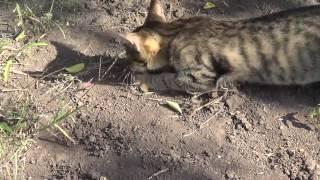 Коты-ловцы мышей