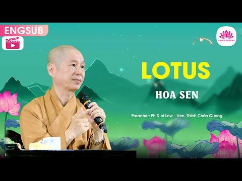 Ý nghĩa Hoa Sen A - Thượng Tọa Thích Chân Quang