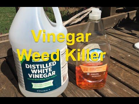 Vinegar and Dish Soap Weed Killer