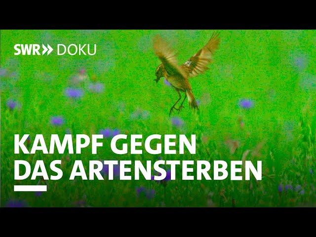 Das große Artensterben - Bedrohung für die Menschheit | SWR Doku