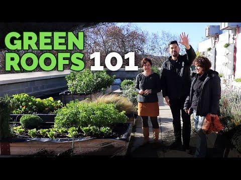 Green Roof Fundamentals: