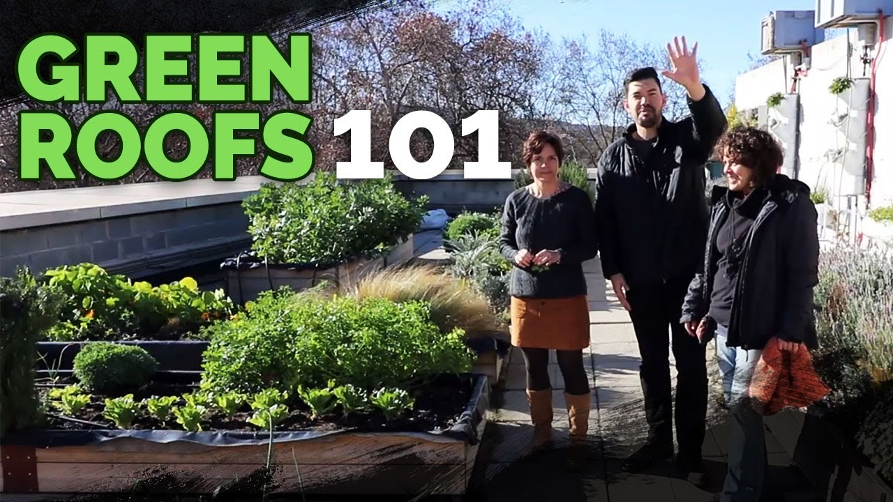 Green Roof Fundamentals Building An Epic Rooftop Garden