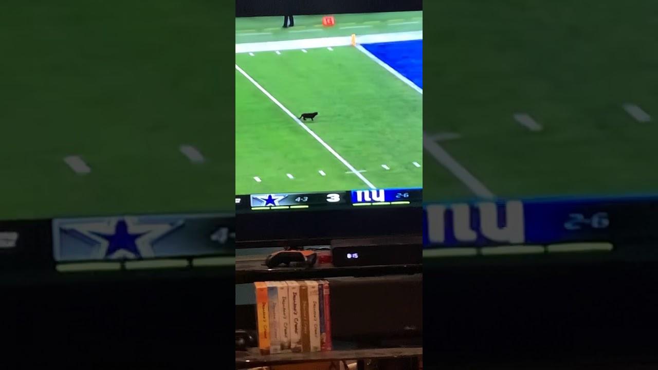 Black Cat Runs On The Field During Monday Night Football Youtube