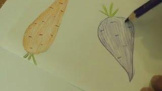 Как нарисовать морковь и свеклу