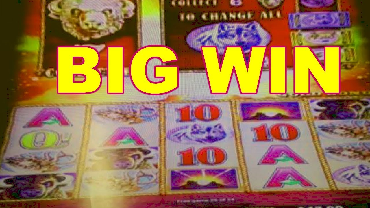 Casino dingo online