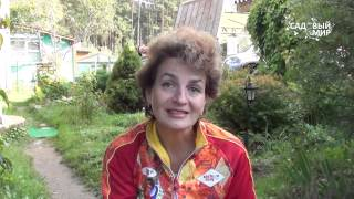 видео Вереск, посадка и уход