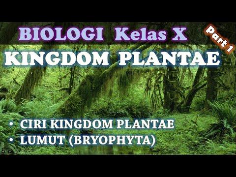KINGDOM PLANTAE (Part 1) : Ciri Kingdom Plantae U0026 Lumut (Bryophyta) _ Biologi SMA Kelas X IPA