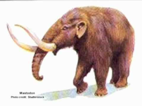 Who would win in a fight between a mammoth and a mastodon? - YouTube