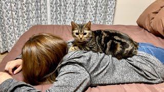疲れて帰宅した飼い主を心配して添い寝しにきてくれる猫