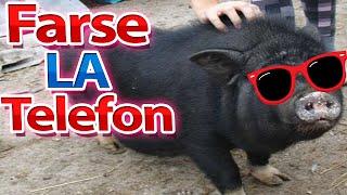 Farse La Telefon - Xslayder Is Cumpara Un Porc !