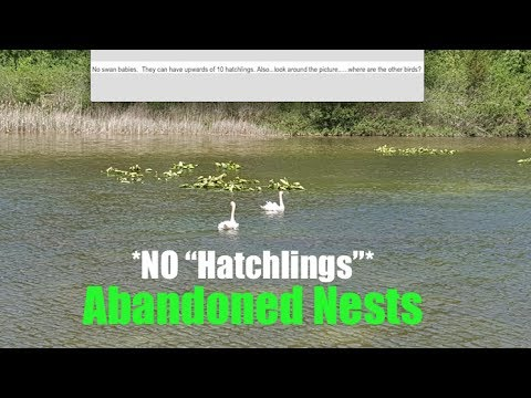 """No Hatchlings"" this year- SE Michigan (Rare) | NJ Farmer of 20 Acres ""No Flies""!"