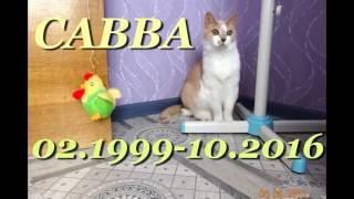 В память любимому коту САВВЕ... спи сладко...(Пятлин-Печора)