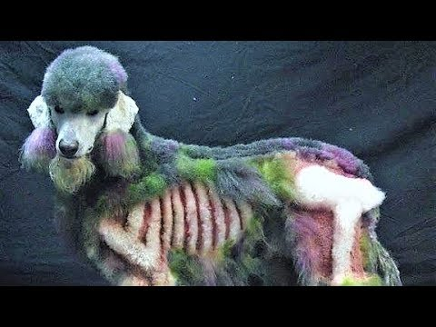 BEST Dog Breeds For The Zombie Apocalypse !