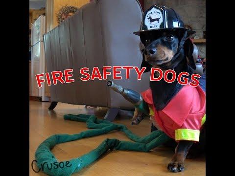 Crusoe & Oakley Dachshund Fire Safety Dogs