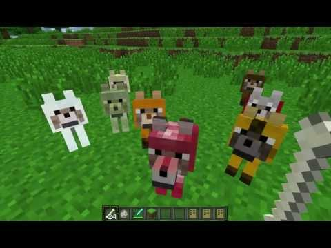 how to give a wolf a name in minecraft