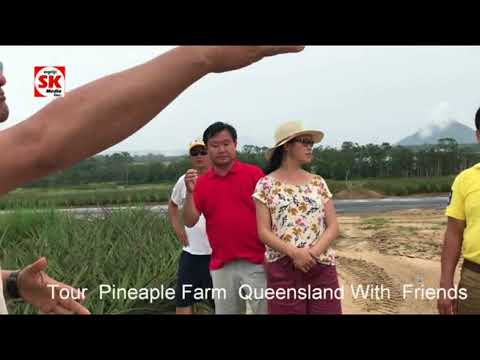 SK Media Report From Tour  Pineaple Farm  Queensland With  Friends