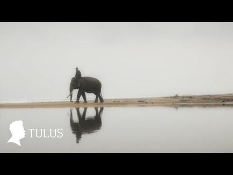 TULUS  Gajah  Music