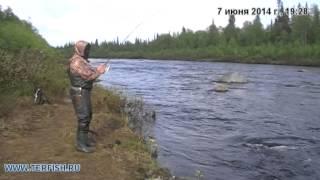 Кольский. Рыбалка на семгу 2014 год. Июнь. Лагерь ТЕРФИШ