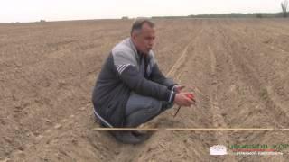 Глубина посадки картофеля(Больше полезных советов картофелеведа (фото/видео): http://ovochevii-dim.com.ua/sovety-kartofeleveda Глубина посадки картофеля..., 2015-06-12T06:59:43.000Z)