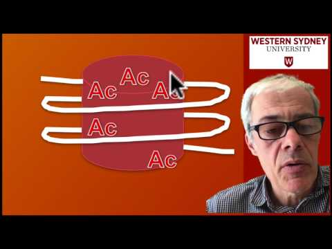 3.5 DNA methylation and acetylation