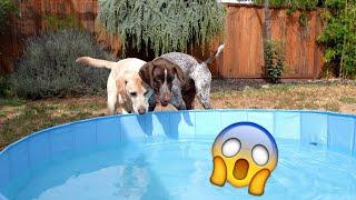 Dog Pool FAIL
