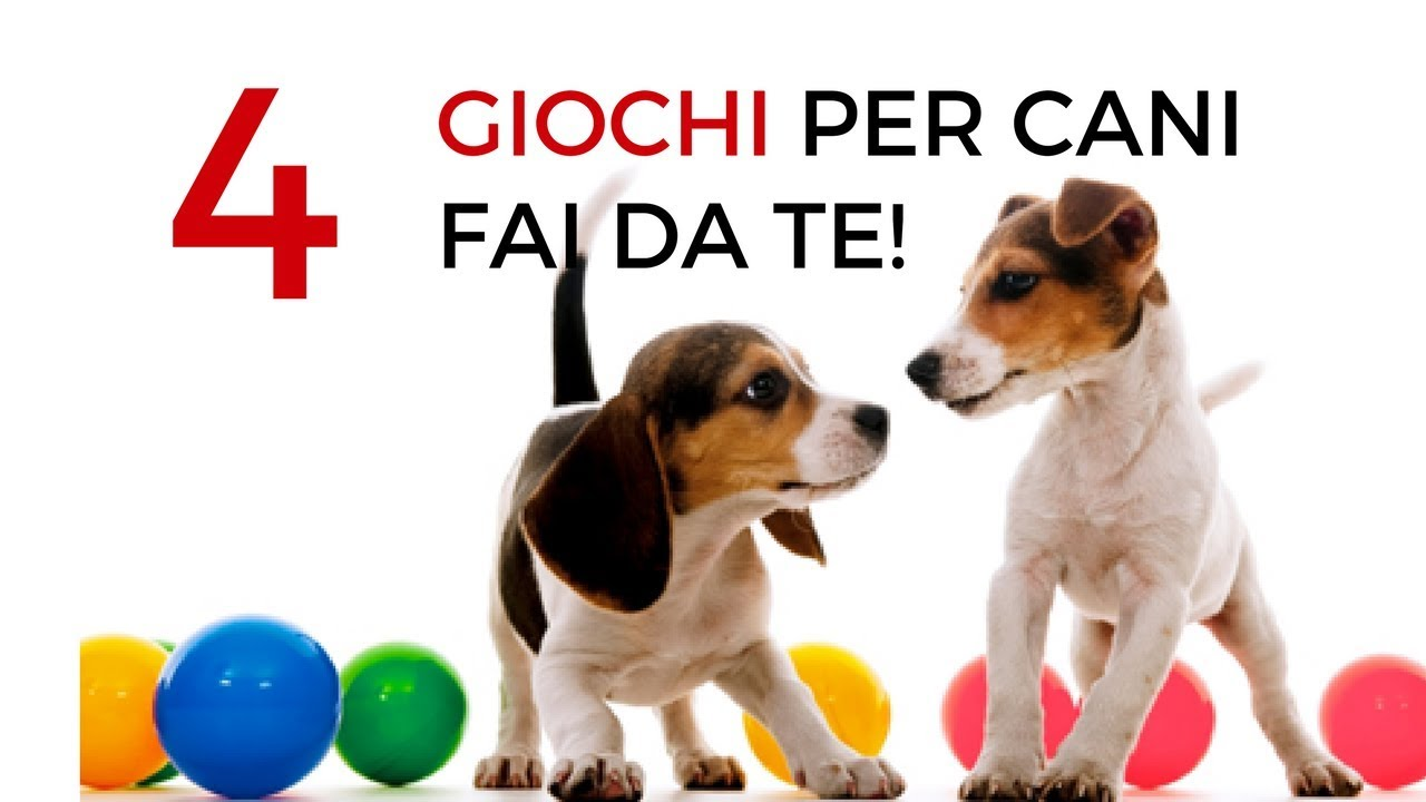 4 giochi per cani fai da te divertenti e stimolanti x for Impermeabile per cani fai da te