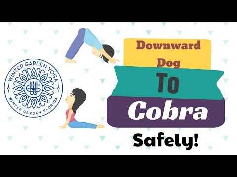 Downward Dog to Cobra Circuit