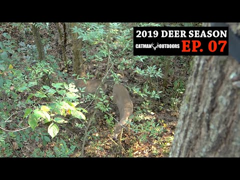 Hunting Acorns on Public Land - 2019 Deer Season, Ep. 07