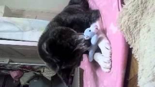 秋田犬*小梅 壊れたおもちゃを直してあげました.