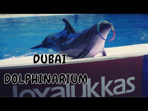 VISIT TO DUBAI DOLPHINARIUM 2021 #dubaidolphinarium #expo2020