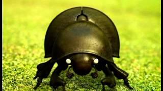 Насекомые Навозный жук  Блюз навозного жука
