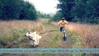 """Международная гонка на собачьих упряжках """"Северная надежда"""", Костромская область"""